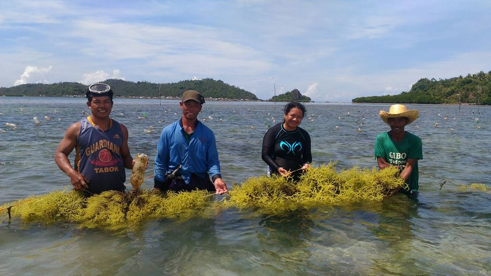 British Council Philippines seaweed