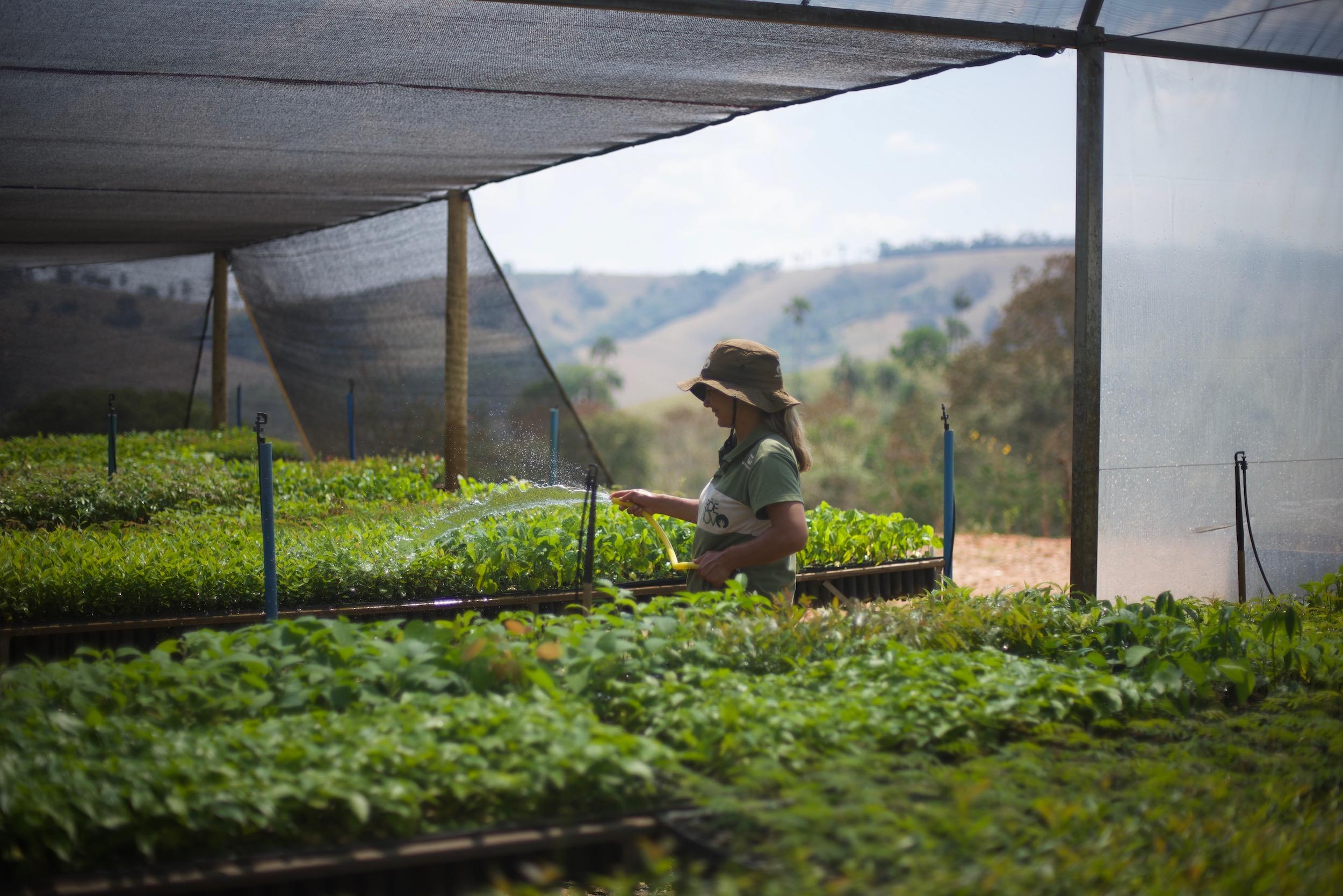 Ecosia in Brazil