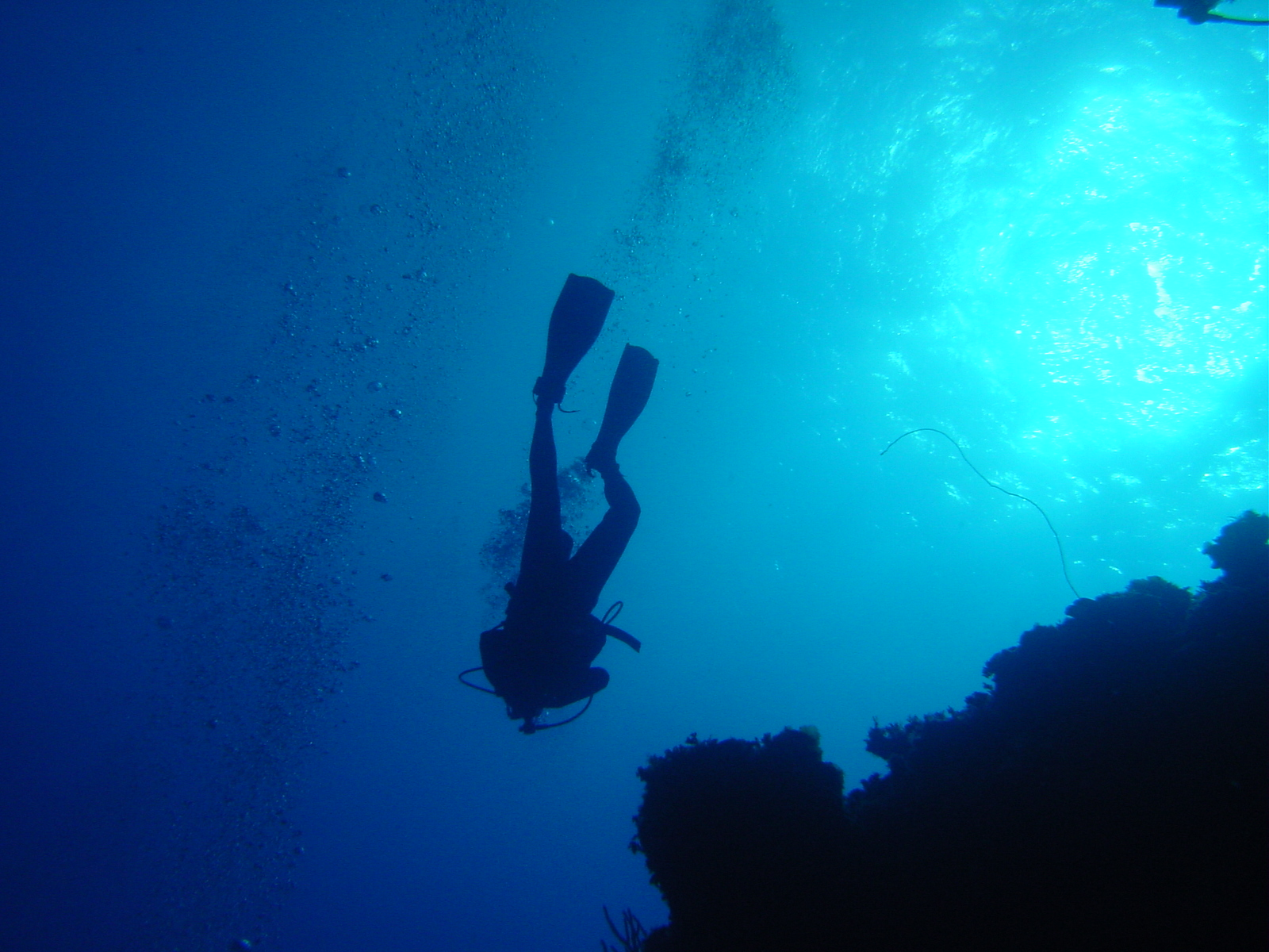 diving deeper pic
