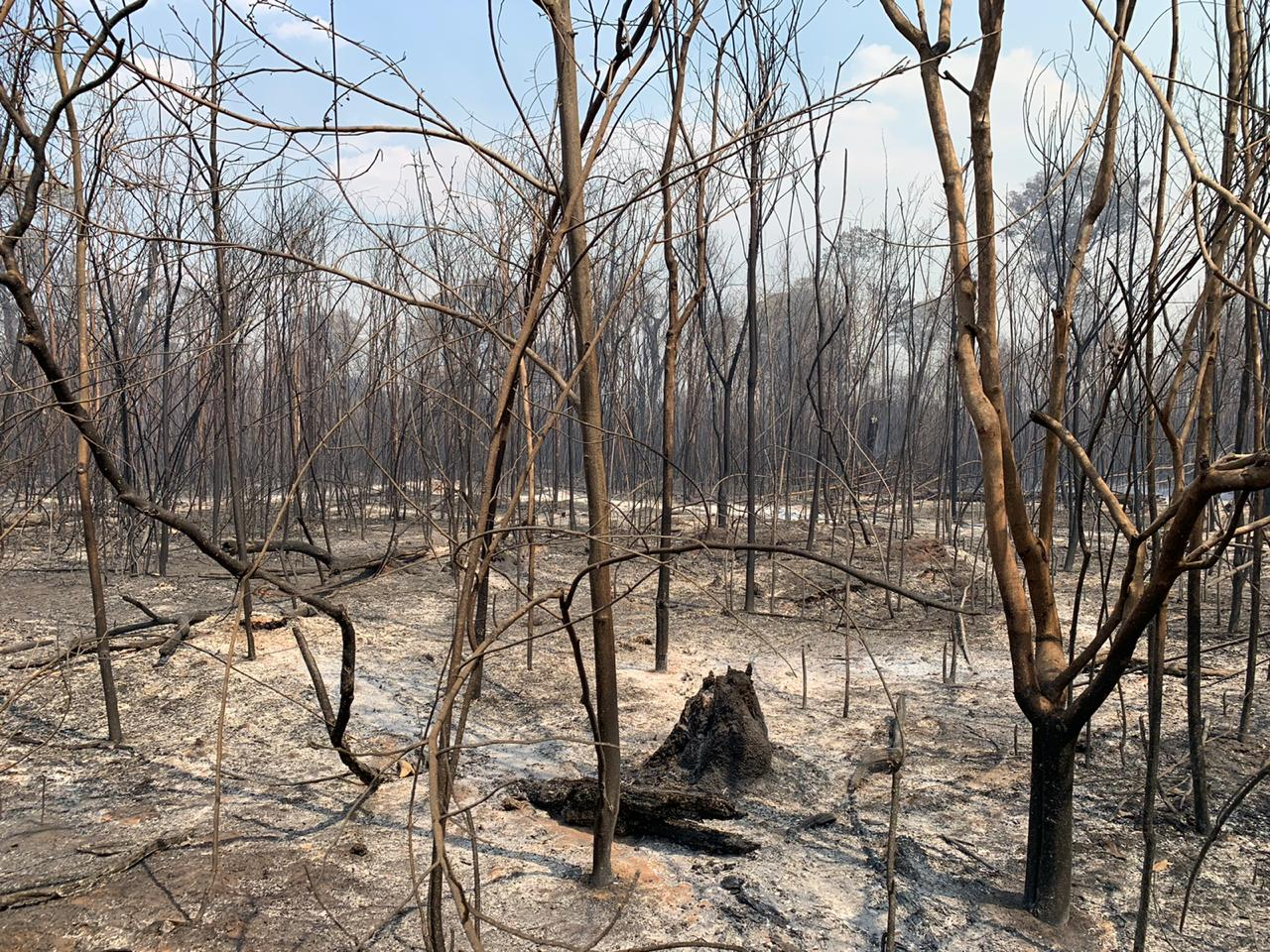 Forest fires Xingu - credit Takumã Kuikuro