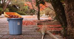 Sweeping up leaves_Autumn