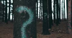 Question marks in a forest