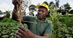 A maizer farmer in Kenya holds a crop