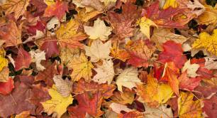 Autumn leaves_nature