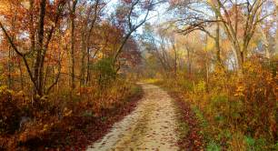 Autumn path_leaves_walk