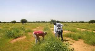 Ecosia_tree planting in Burkina Faso_B Corp
