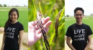 Siam Organic_Jasberry rice