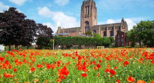 Poppies in Liverpool