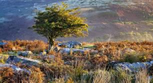 small tree-surrounded-by-greenery-sunlight-dartmoor-national-park-devon-uk.jpg