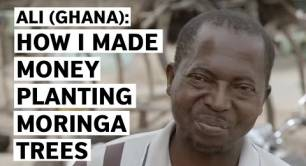 Ali (Ghana): How I made money planting Moringa trees